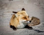 Fox-Island-State-Park-NJ-0509