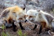 fox2_17158006295_o