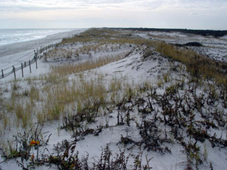 Science of the Shore – A Tale of Two Beaches: Winter & Summer Beach